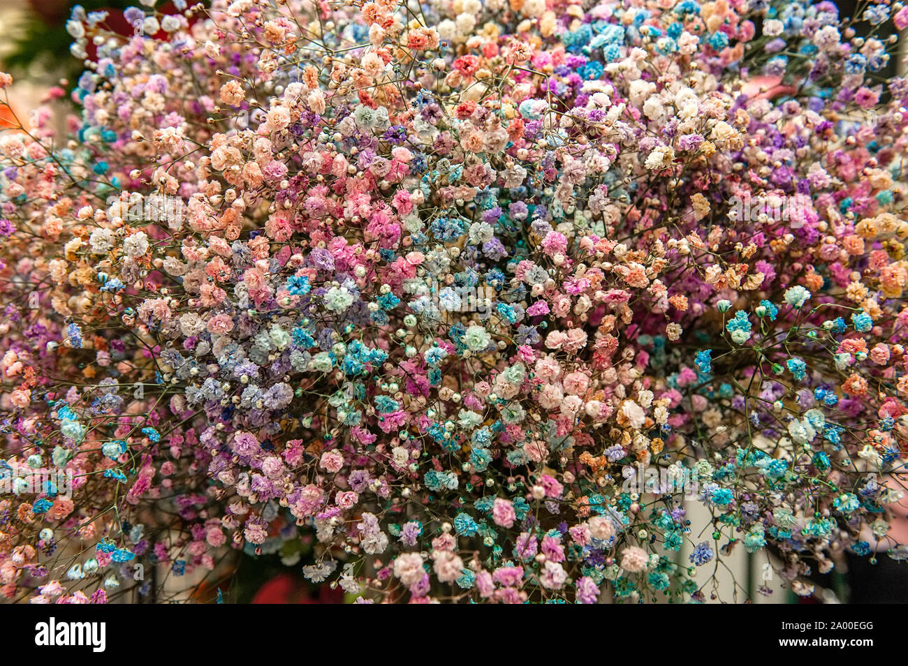 Floral Beautiful Colored Background Small Colorful Inflorescences Of Small Flowers Flowers Baby S Breath Selective Focus Stock Photo Alamy