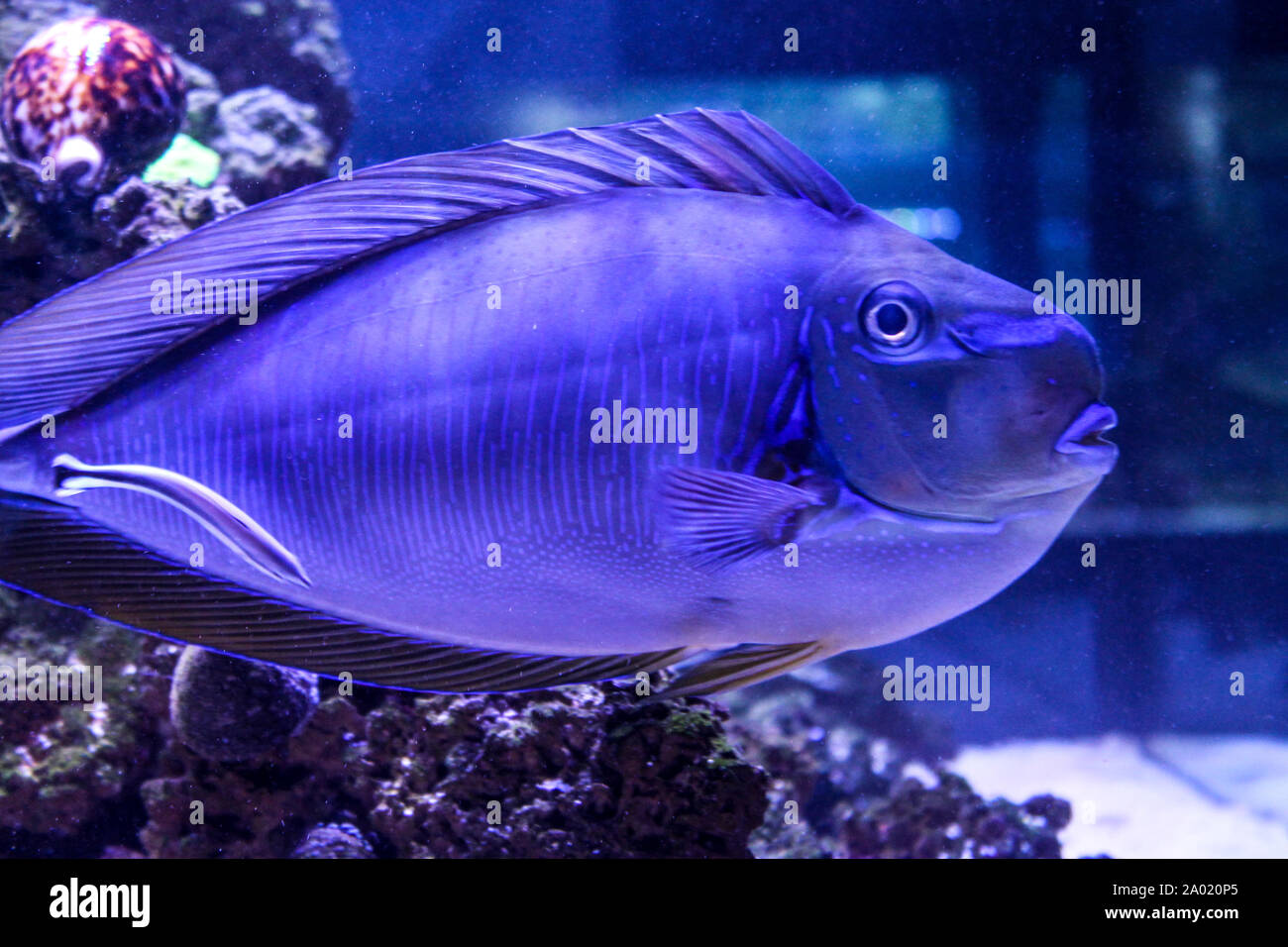Marine Background With Purple Coral Reef Fish Sea And Ocean Life