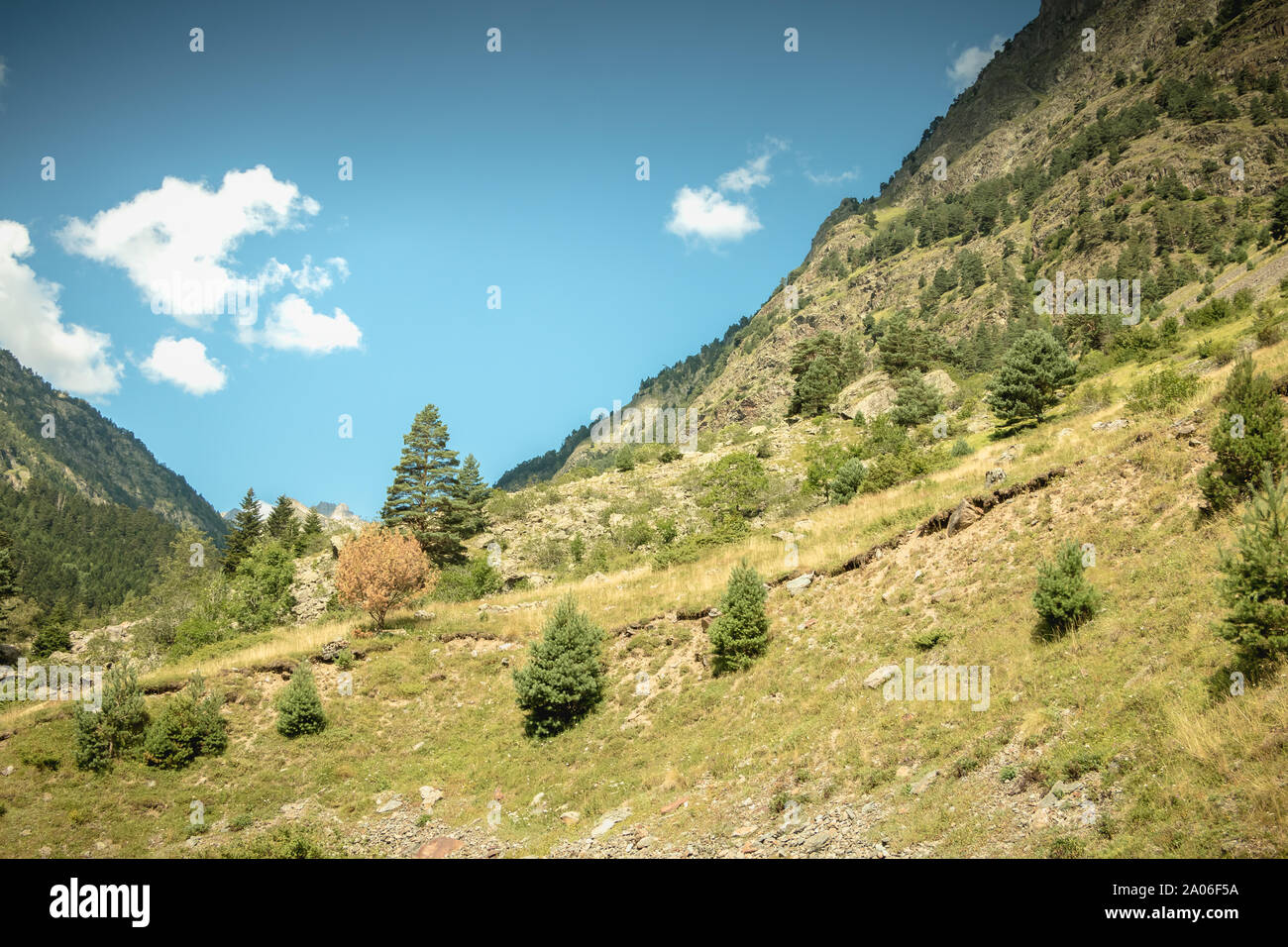 hiking path with trees and vegetation in the Pyrenees mountains in France Stock Photo