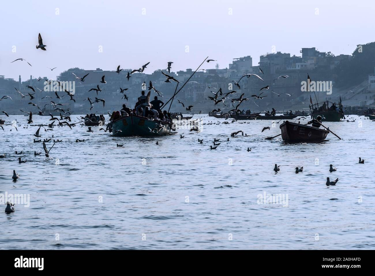 Boats full of people navigating on the Ganges river, surrounded by flying gulls, Varanasi, Uttar Pradesh, India Stock Photo