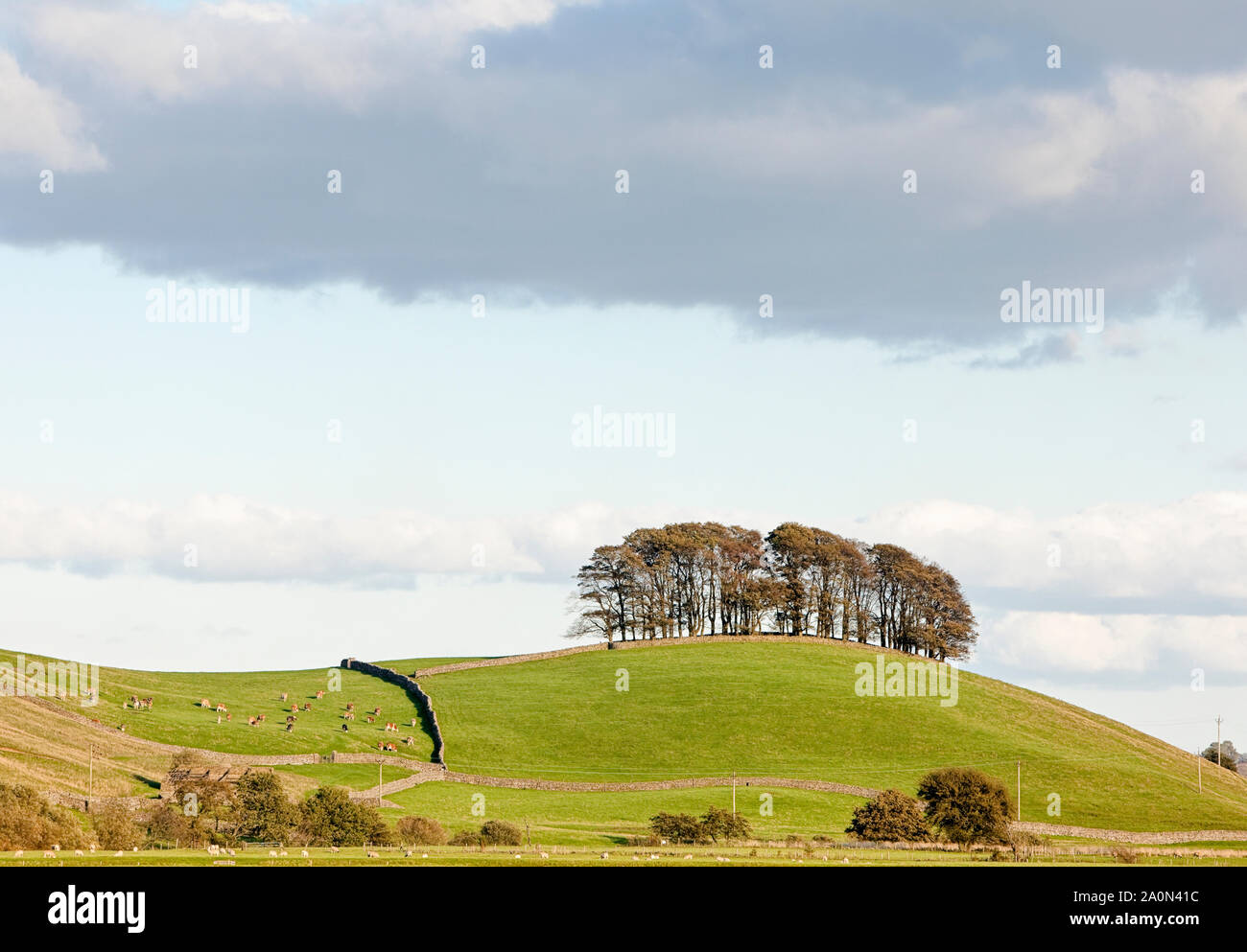 Group of trees, woodland, on top of a small hill in the countryside Stock Photo