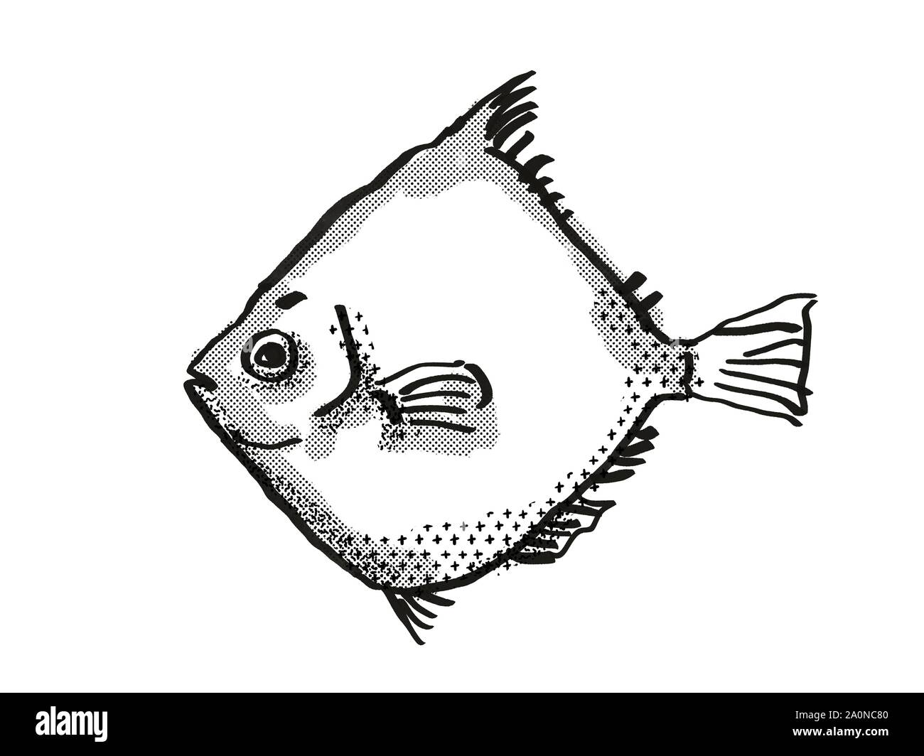 Retro cartoon style drawing of a Rosy Deepsea Boarfish , a native Australian marine life species viewed from side on isolated white background done in Stock Photo