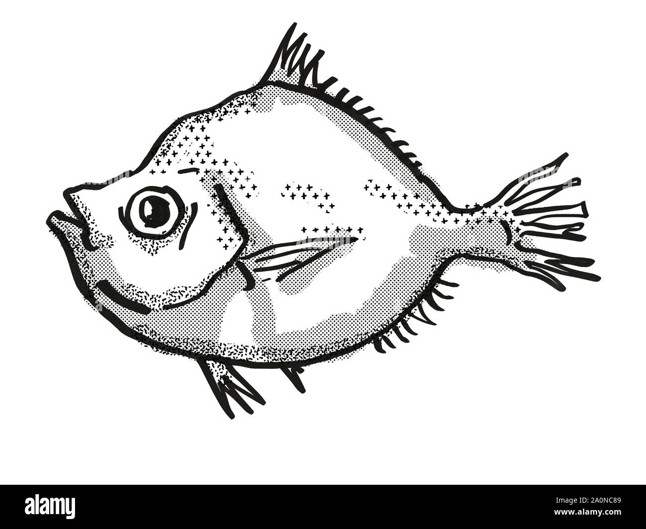 Retro cartoon style drawing of a Malayan Deepsea Boarfish , a native Australian marine life species viewed from side on isolated white background done Stock Photo