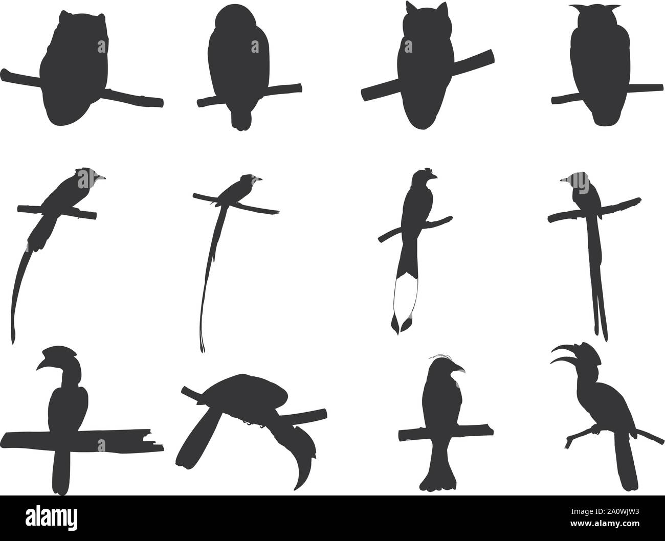Collection of Asian Paradise Flycatcher, Hornbill, Drongo, Owl Bird  on tree branch Silhouettes. Vector illustration isolated on white Stock Vector