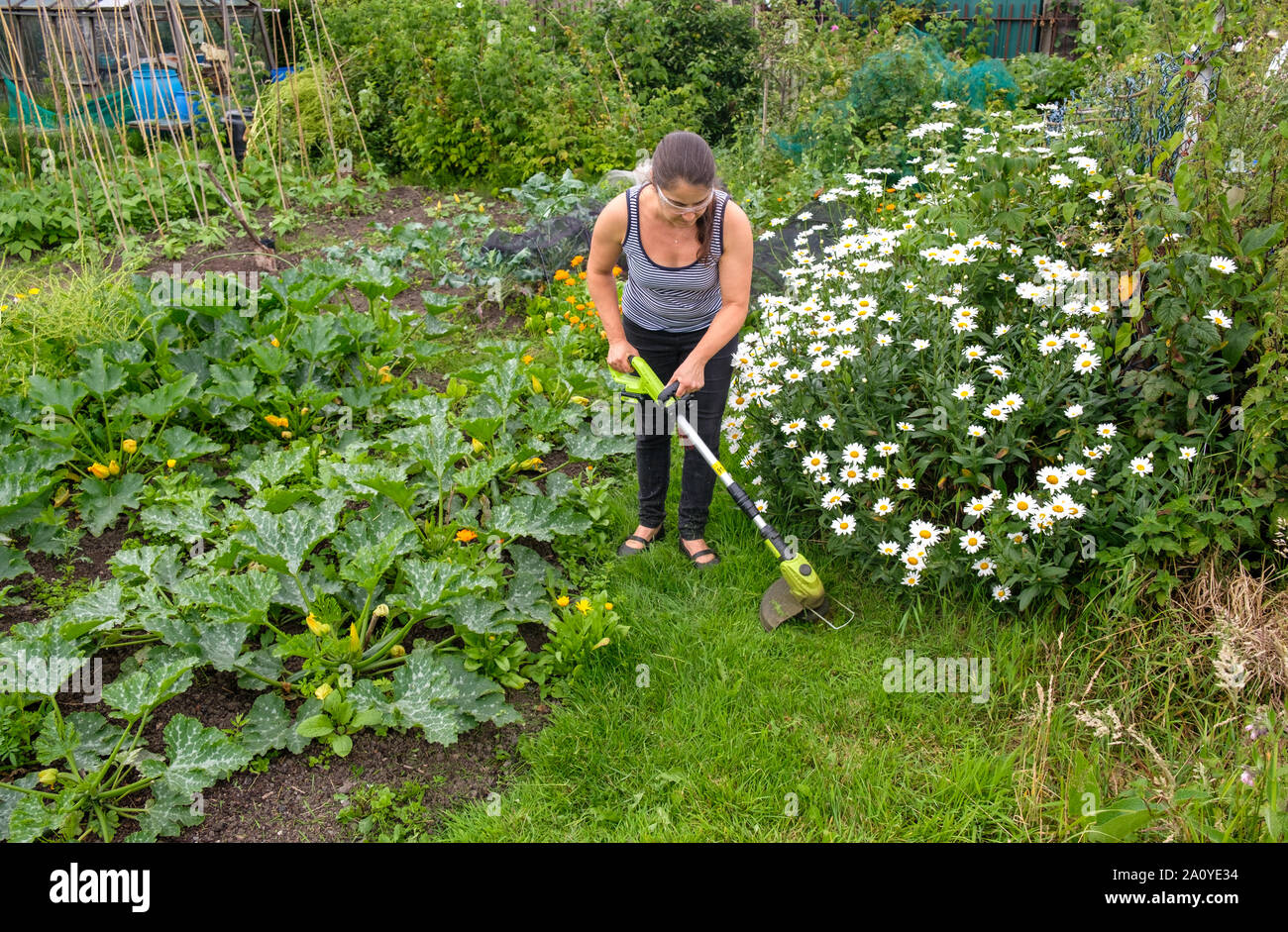 Woman using cordless (lithium-ion battery) strimmer to cut grass on path in allotment Stock Photo