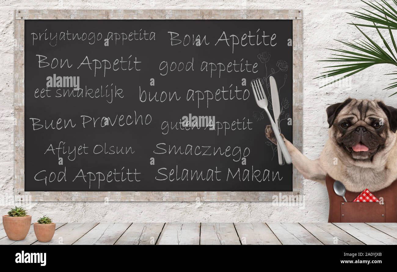 Enjoy your meal - blackboard with good appetite in multiple languages with happy smiling pug puppy dog with fork and knife cutlery and leather apron a Stock Photo