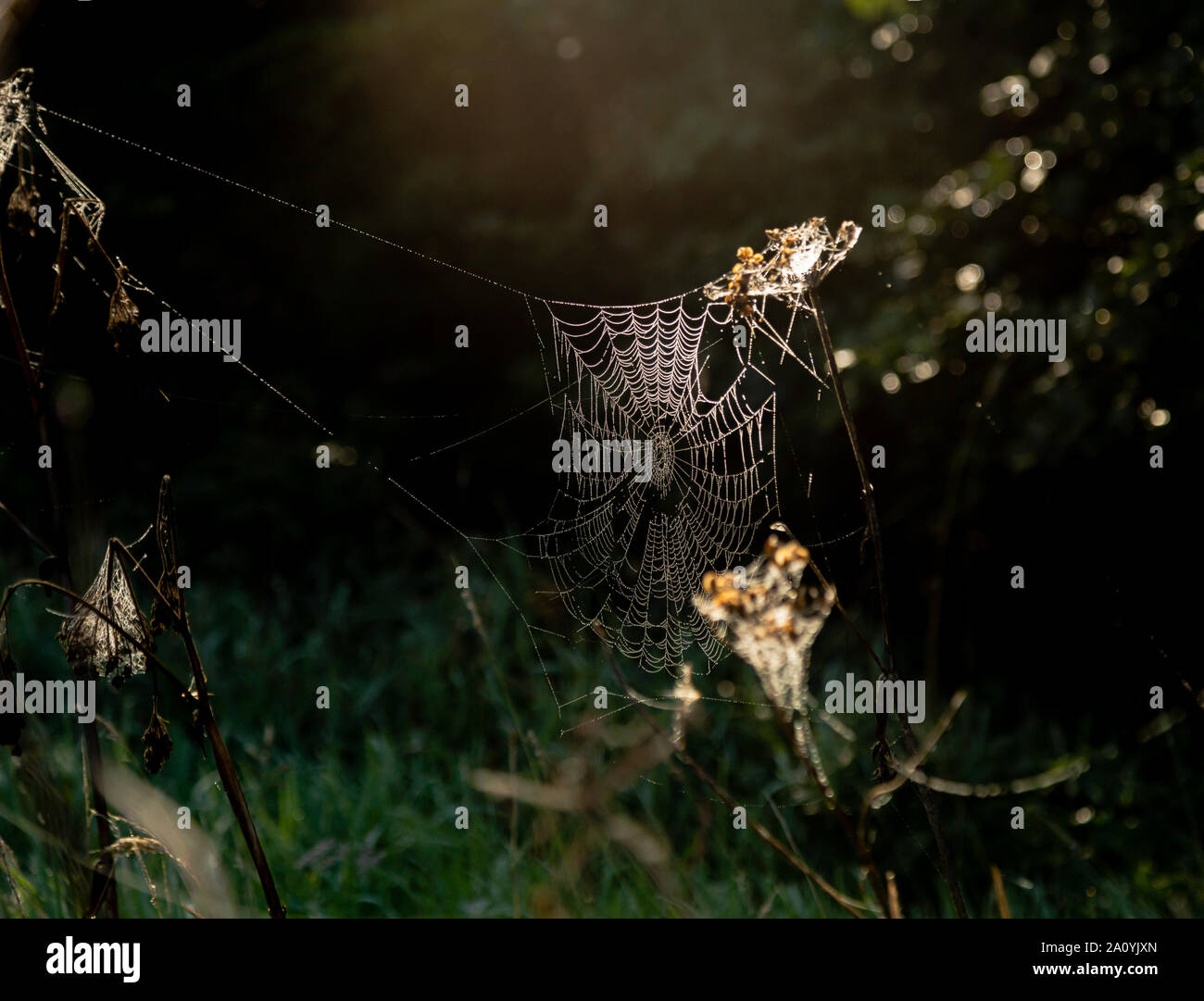 A large spider's web covered in dew drops taken on a misty autumn morning in Yorkshire, England. Stock Photo