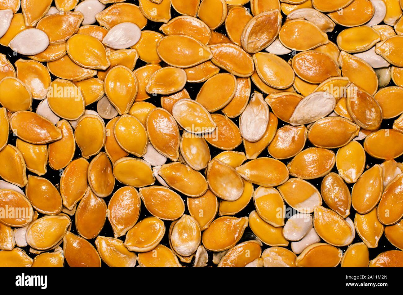 Shiny wet orange and white pumpkin seeds on a black background closeup Stock Photo