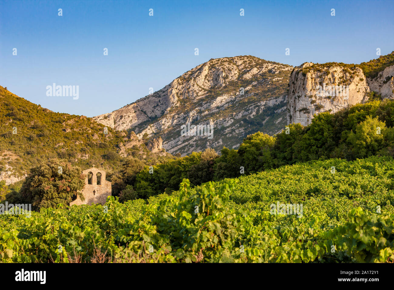 vineyards in the wine region Languedoc-Roussillon, Roussillon, France Stock Photo