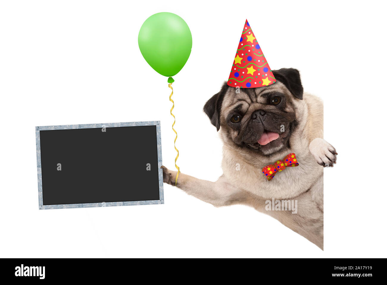 frolic smiling birthday party pug dog, with balloon and hat decoration holding blank blackboard sign, isolated on white background Stock Photo