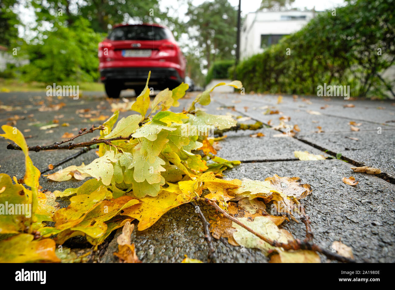 Nuremberg, Germany - September 23, 2019: Wet yellow autumn leaves are lying on the pavement with a car parking in front on a rainy autumn day in Germa Stock Photo