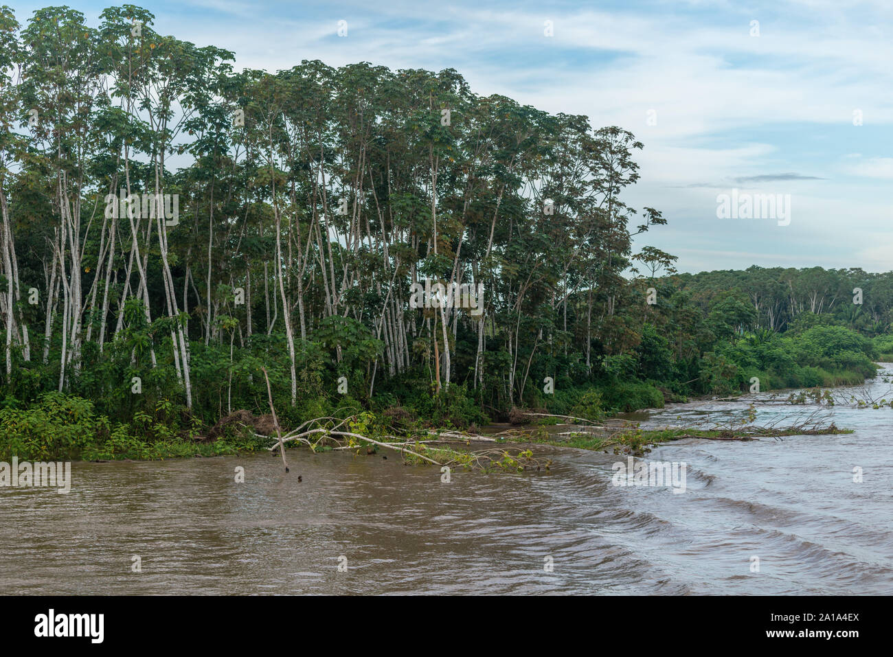 Obersations on a two-day boat trip from Manaus to Tefé, Rio Solimoes, Amazonas, The Amazon, Brazil, Latin America Stock Photo