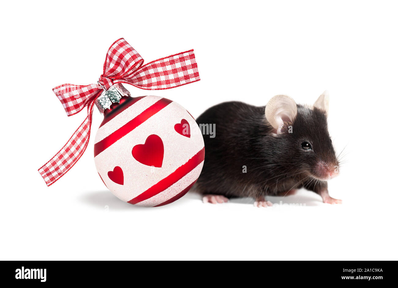 White Christmas ball with red hearts and a ribbon and black mouse, symbol of the New Year 2020 isolated on white background with shadows Stock Photo