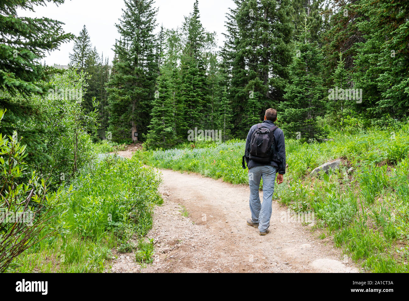 Albion Basin, Utah summer trail in 2019 season in Wasatch mountains with man walking with backpack on dirt road Stock Photo