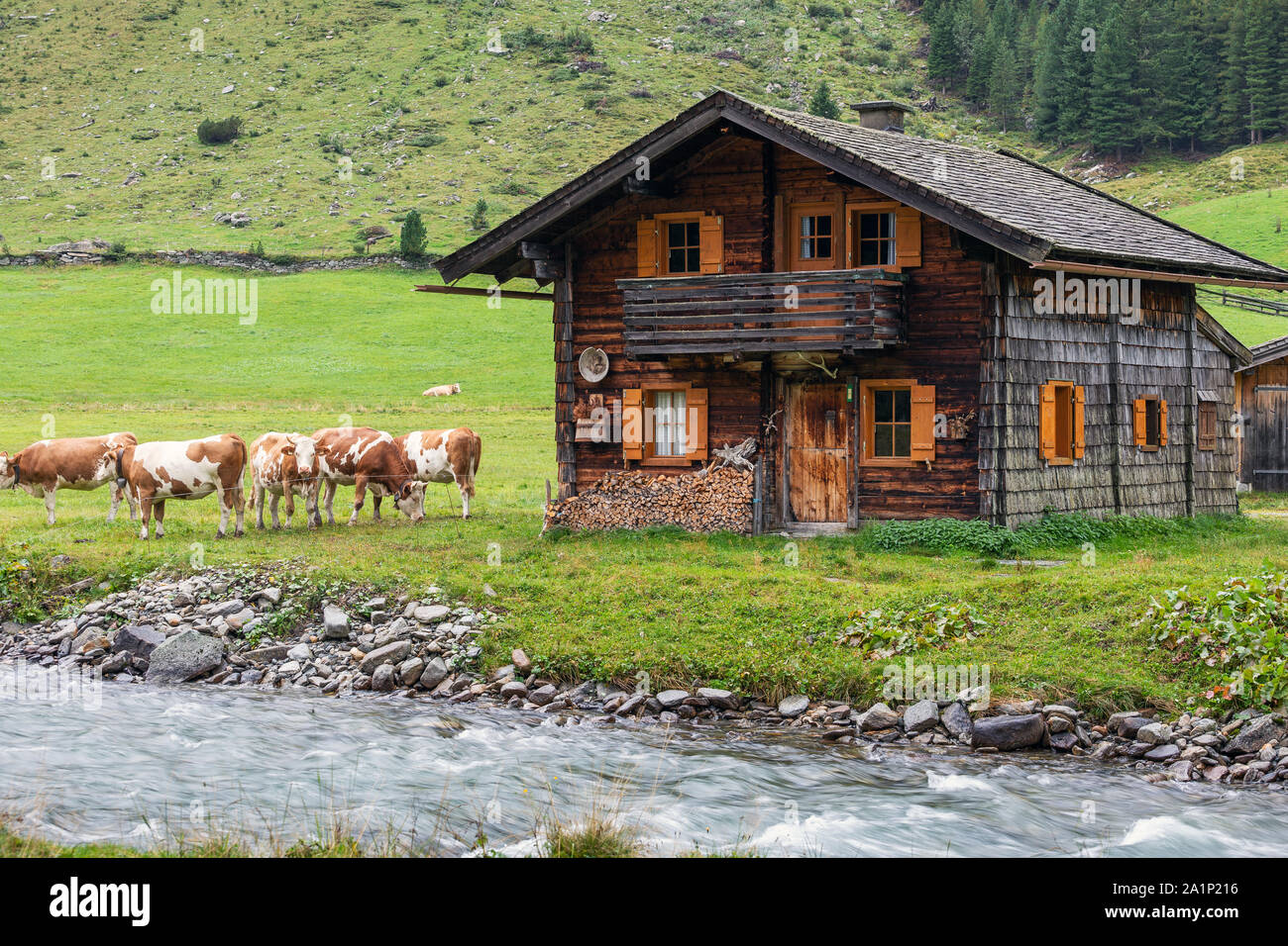 Wooden alm and grazing cows. Krimmler Achen valley. Hohe Tauern National Park. Austrian Alps. Stock Photo