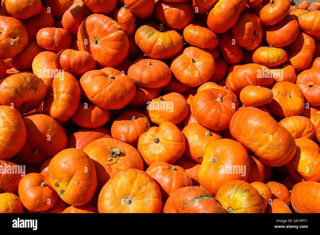 A Bunch Of Pumpkins For Sale To Be Used As Fall Decorations