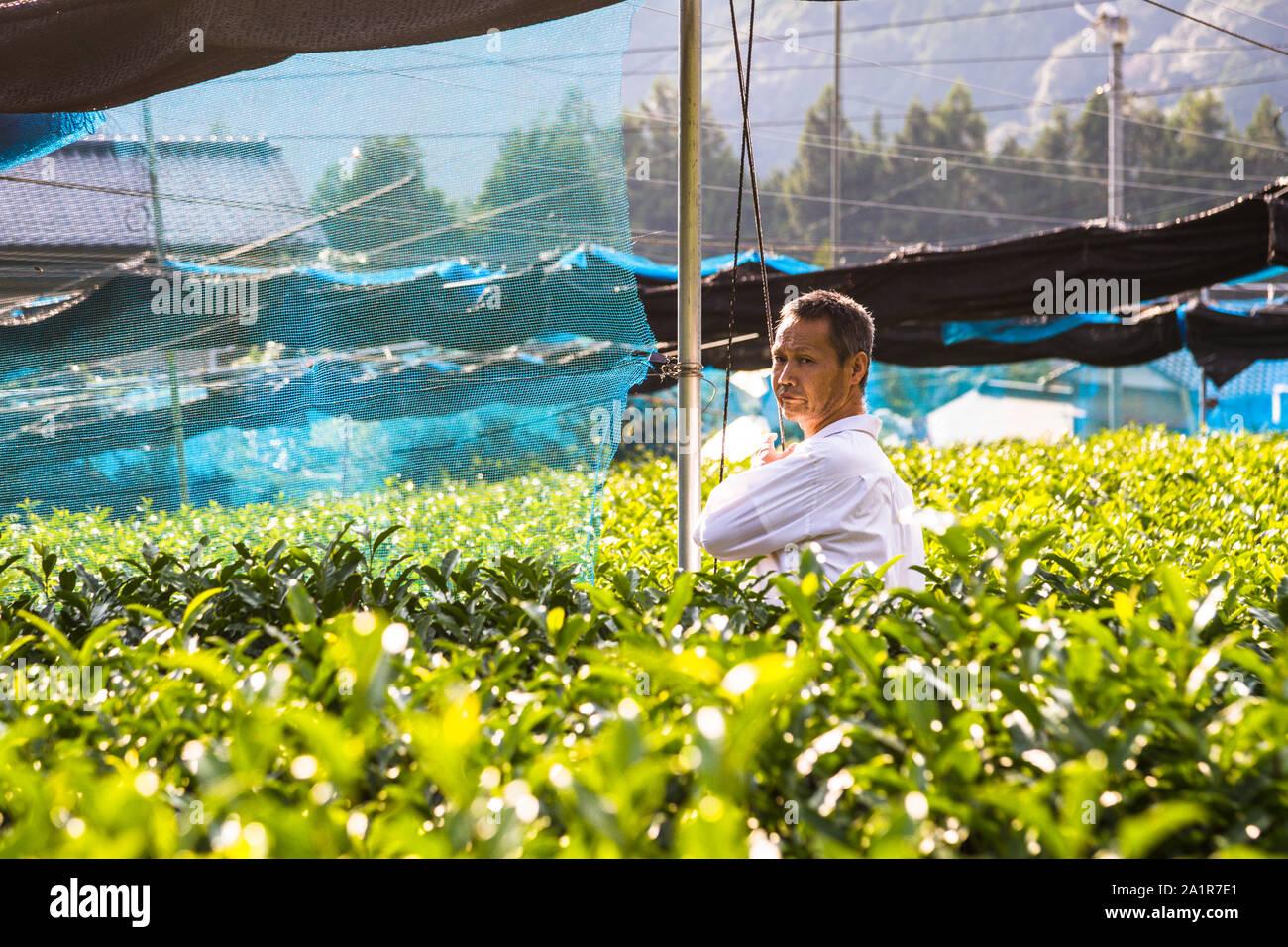 Japanese Green Tea Farm of Shizuoka, Japan Stock Photo