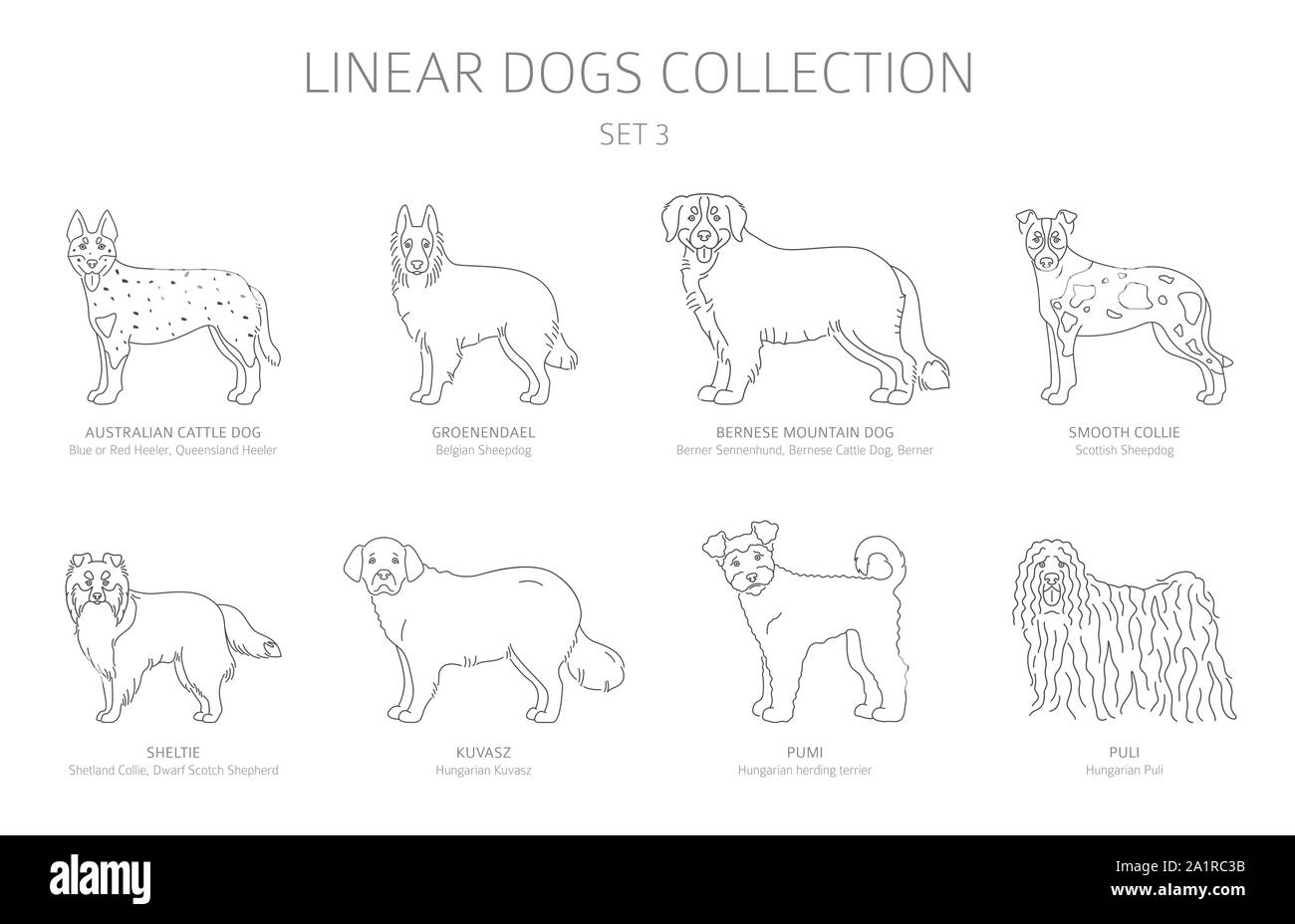 Simple line dogs collection isolated on white. Dog breeds. Flat style clipart set. Vector illustration Stock Vector