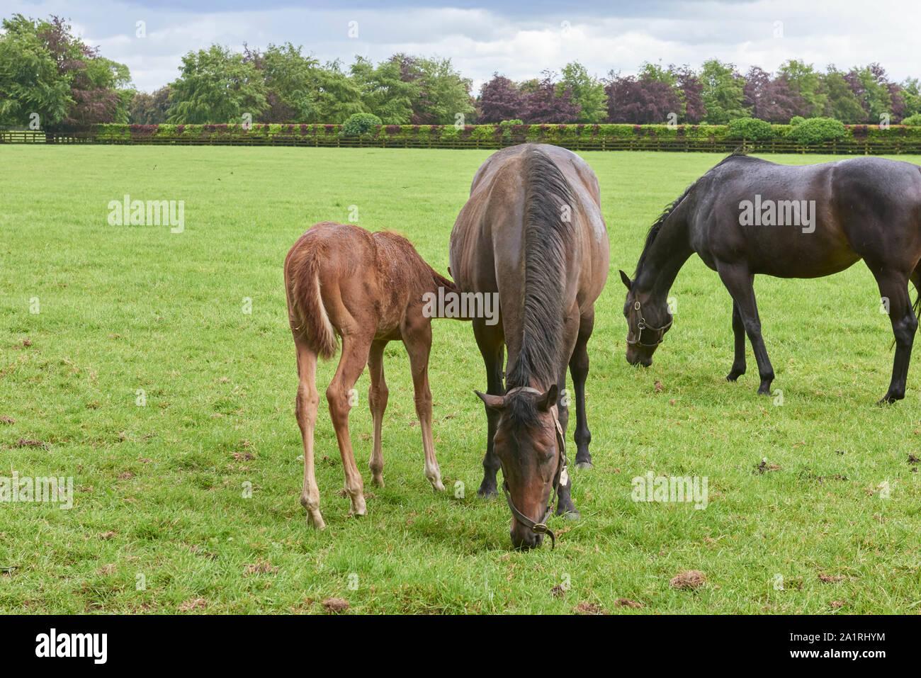 Kildare Village Stock Photos & Kildare Village Stock Images