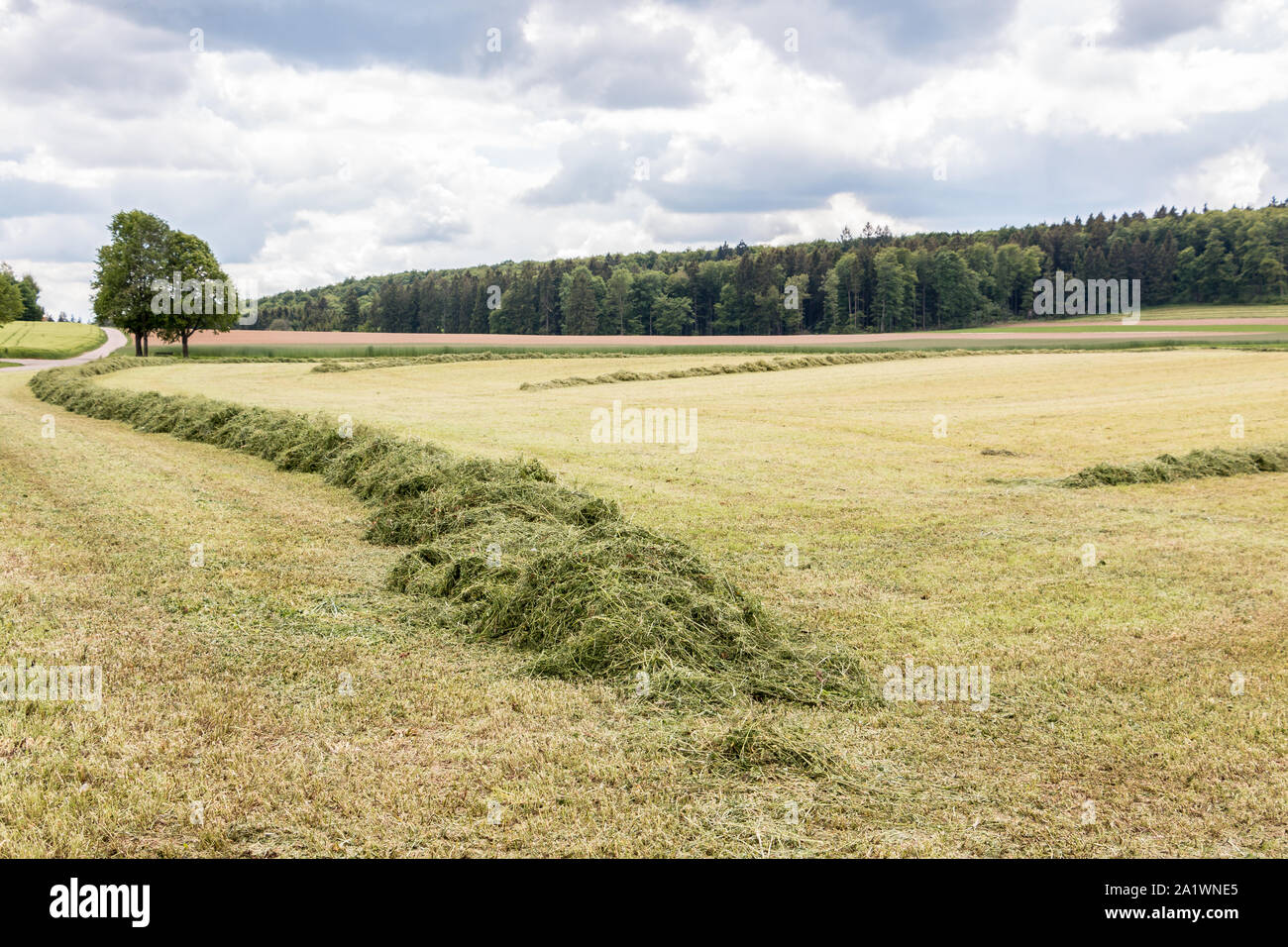 Big meadow with cut grass in the middle of the german countryside Stock Photo