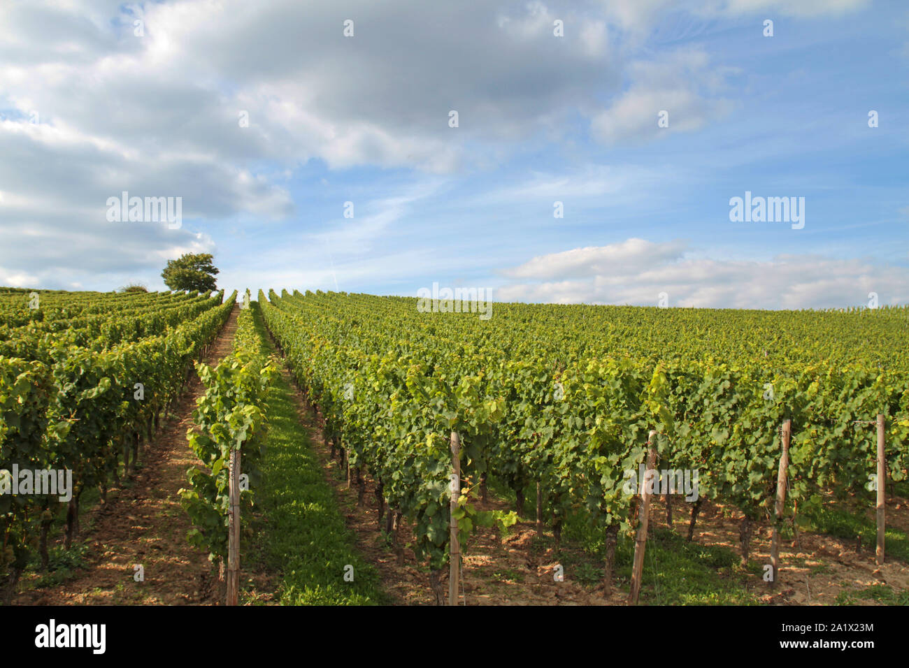 cloudscape over summerly viniculture in Germany Stock Photo
