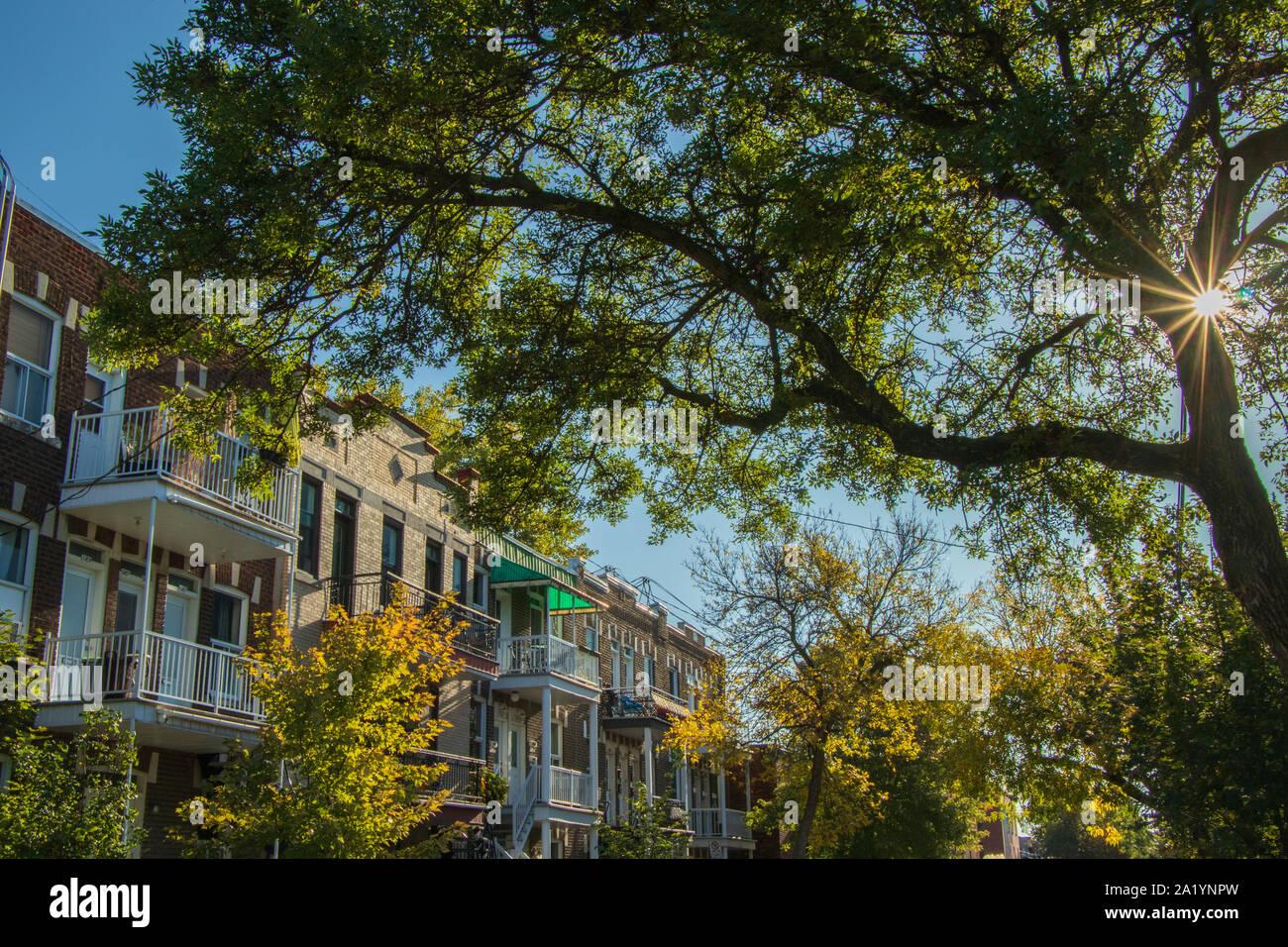 September 29, 2019 - Montréal, Québec, Canada: Montreal housing and a sunburst through a tree by an autumn morning Stock Photo