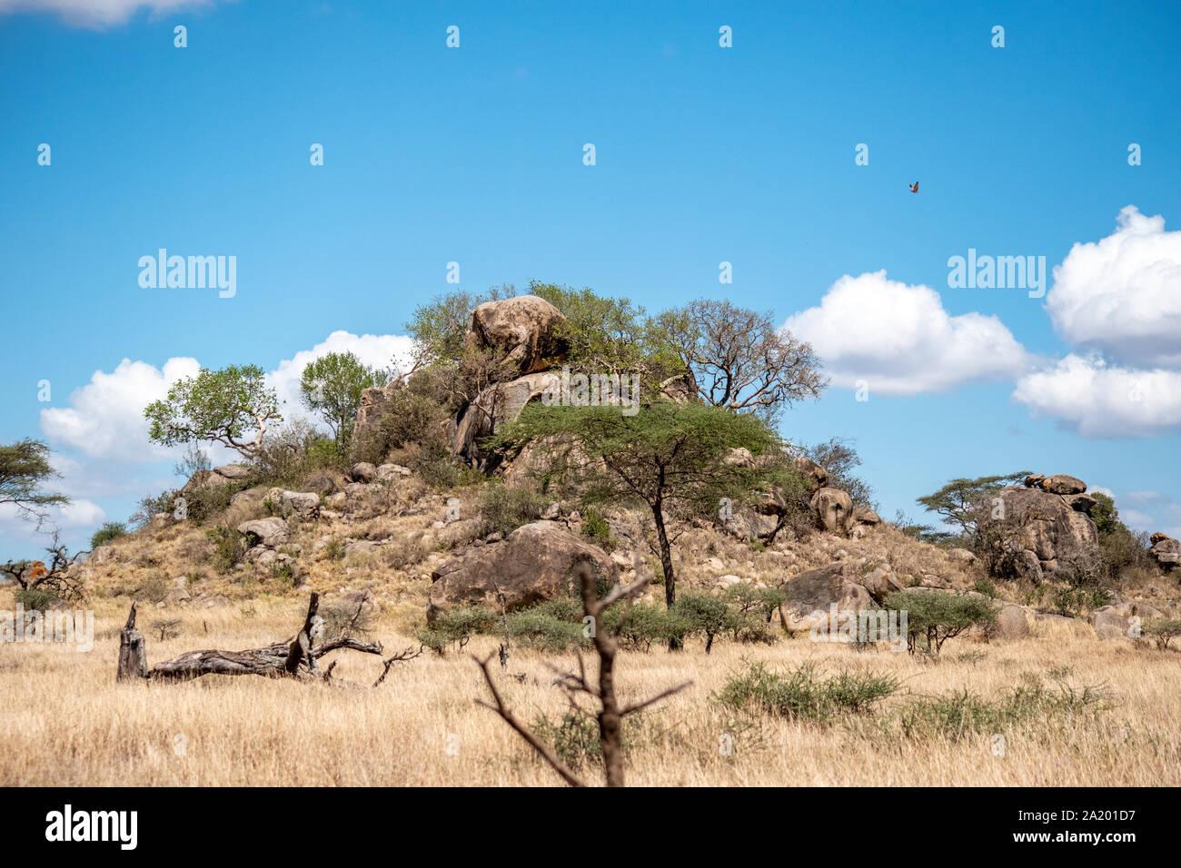 Serengeti landscapes with beautiful acacia trees. Stock Photo