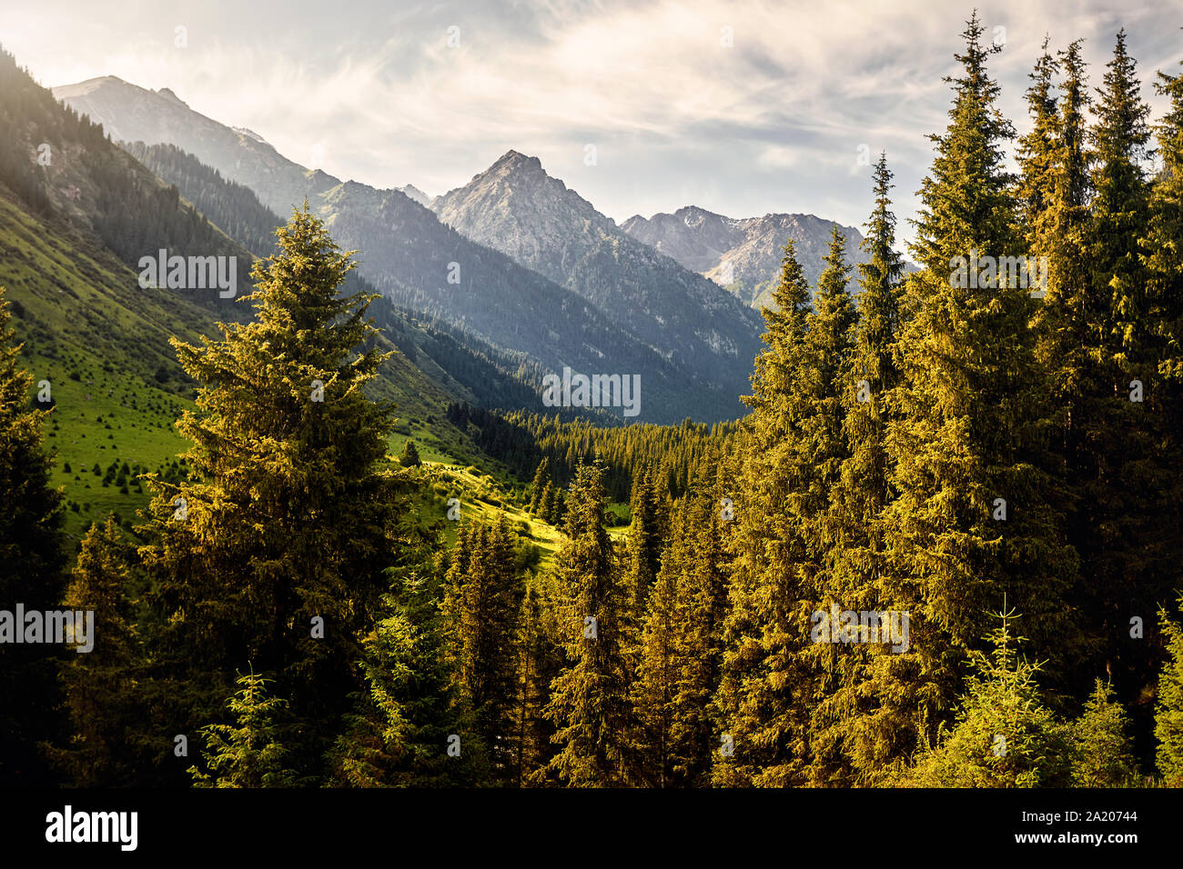 Landscape of mountain valley with spruce trees and snowy peak in Karakol national park, Kyrgyzstan Stock Photo