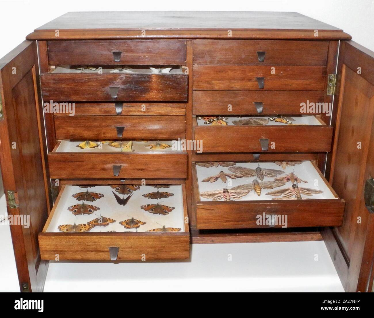 Butterfly collector's cabinet. A popular pastime particularly for gentlemen in the Victorian and Edwardian eras. Entomologists collected vast numbers of insects and pinned them into specially made cabinets. Continues today but is less politically correct as cameras can preserve all of the detail without destroying the subject. Stock Photo