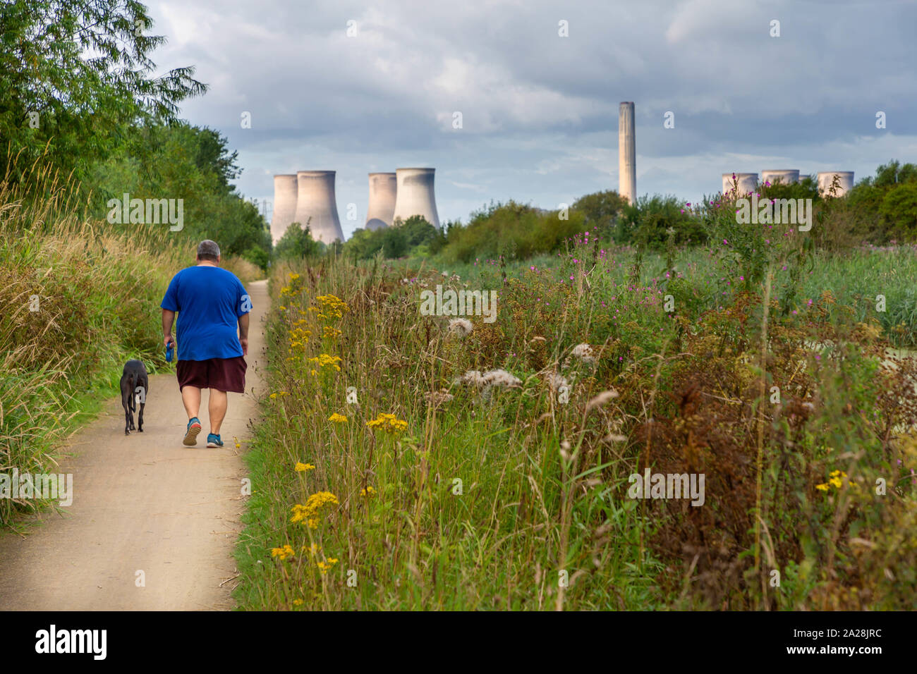 Overweight man in shorts walks his dog along the Trans Pennine Trail toward Fiddlers Ferry Power Station, St Helen's Canal, Gatewarth, Warrington Stock Photo