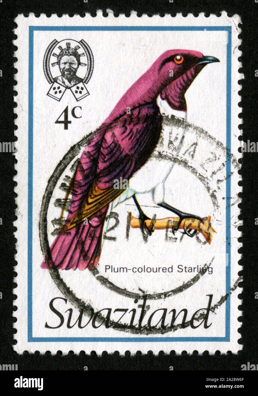 Stamp print in Swaziland, Plum-coloured Starlieg,birds Stock Photo