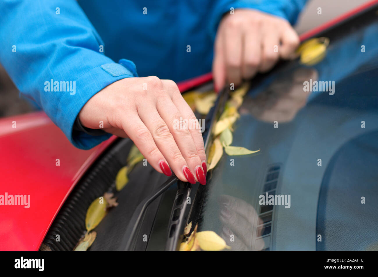Hands of a young girl with red nails cleaned of fallen autumn leaves wiper blades and car windshield Stock Photo