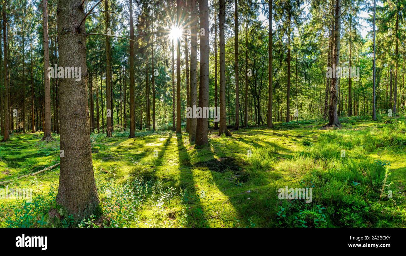 Sonne scheint durch Bäume auf Lichtung im Wald Stock Photo