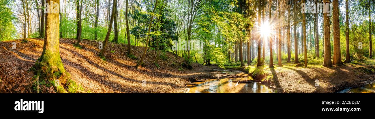Idyllischer Wald mit Bach und Sonne Stock Photo