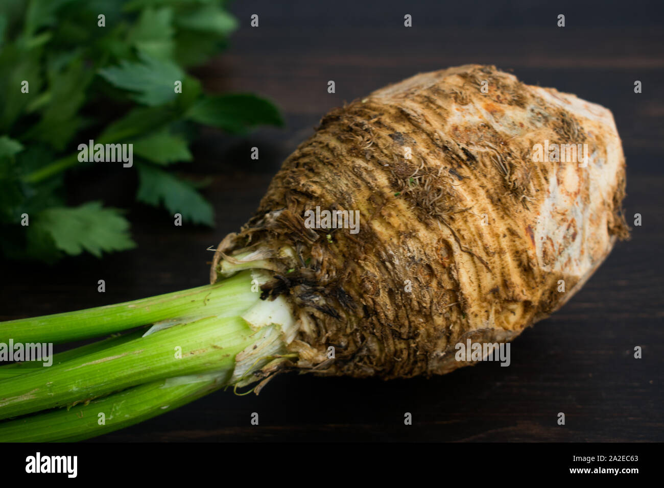 Celery Root with Stems and Leaves: Raw celeriac bulb with stems and leaves on a dark wood background Stock Photo