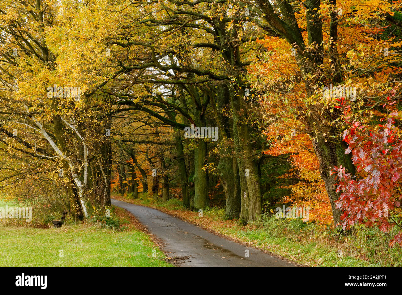"""Forest path on the """"Mossauer Höhe"""" near Erbach in the Odenwald region, Hesse, Germany Stock Photo"""