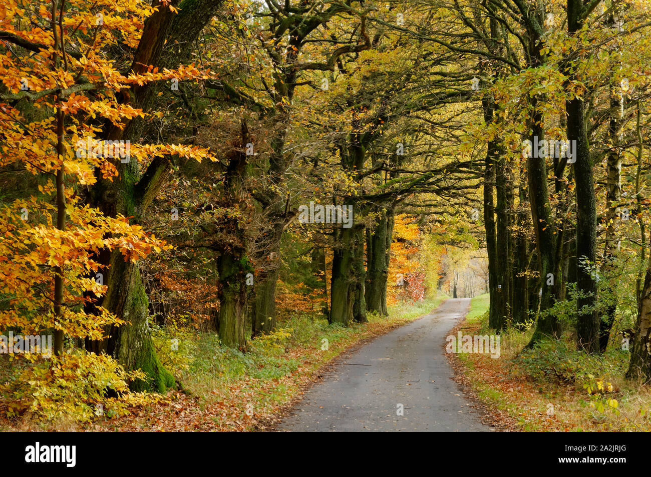 "Forest path on the ""Mossauer Höhe"" near Erbach in the Odenwald region, Hesse, Germany Stock Photo"