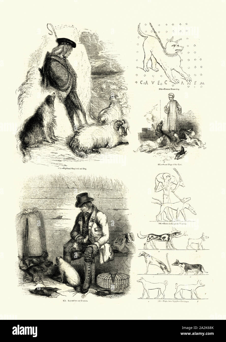 Vintage engraving of Man and his dogs through history. Pictorial Museum of Animated Nature Stock Photo