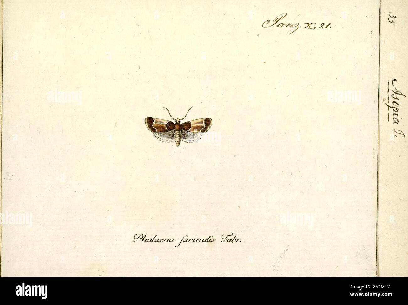 Asopia, Print, Pyralis is a genus of snout moths. It was described by Carl Linnaeus in 1758 Stock Photo