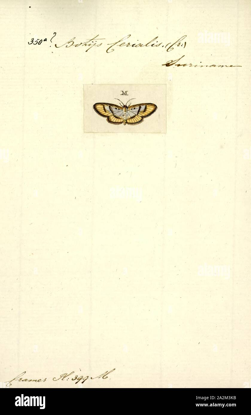 Botys, Print, Pyrausta is a specious genus of moths of the family Crambidae. The genus was erected by Franz von Paula Schrank in 1802 Stock Photo