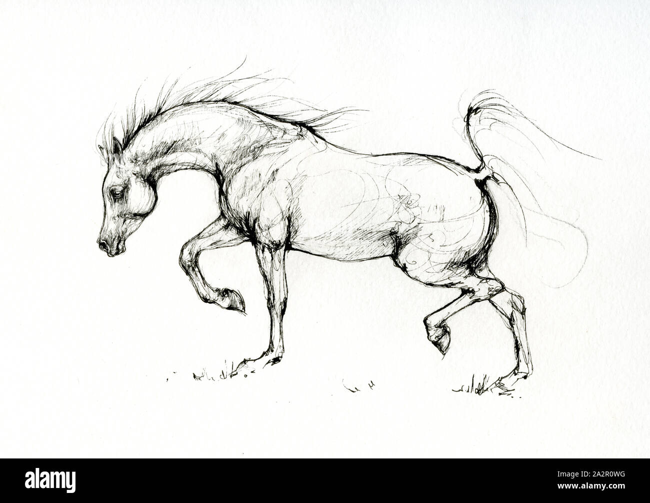 Running Horses Drawing High Resolution Stock Photography And Images Alamy
