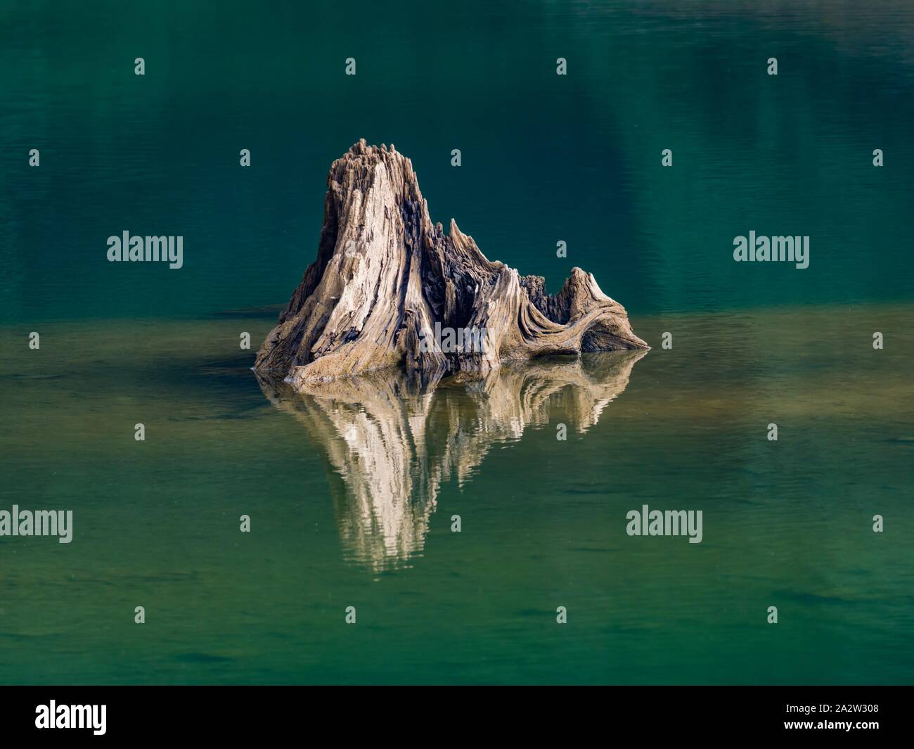 Smooth water lake surface protruding dried stump of tree Stock Photo