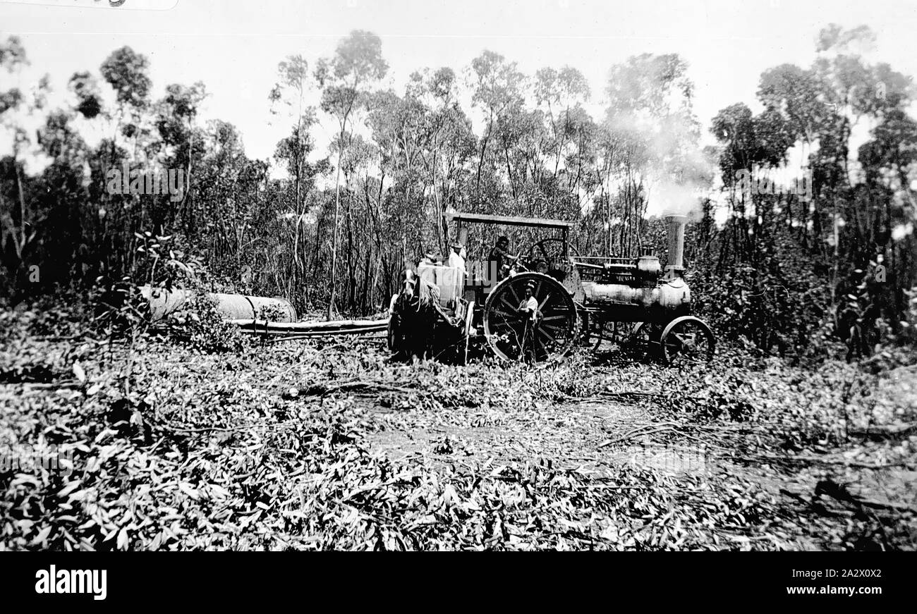 Negative - Kamarooka District, Victoria, circa 1930, Rolling gum trees with old boiler. They are collecting eucalypts for a eucalyptus plant Stock Photo