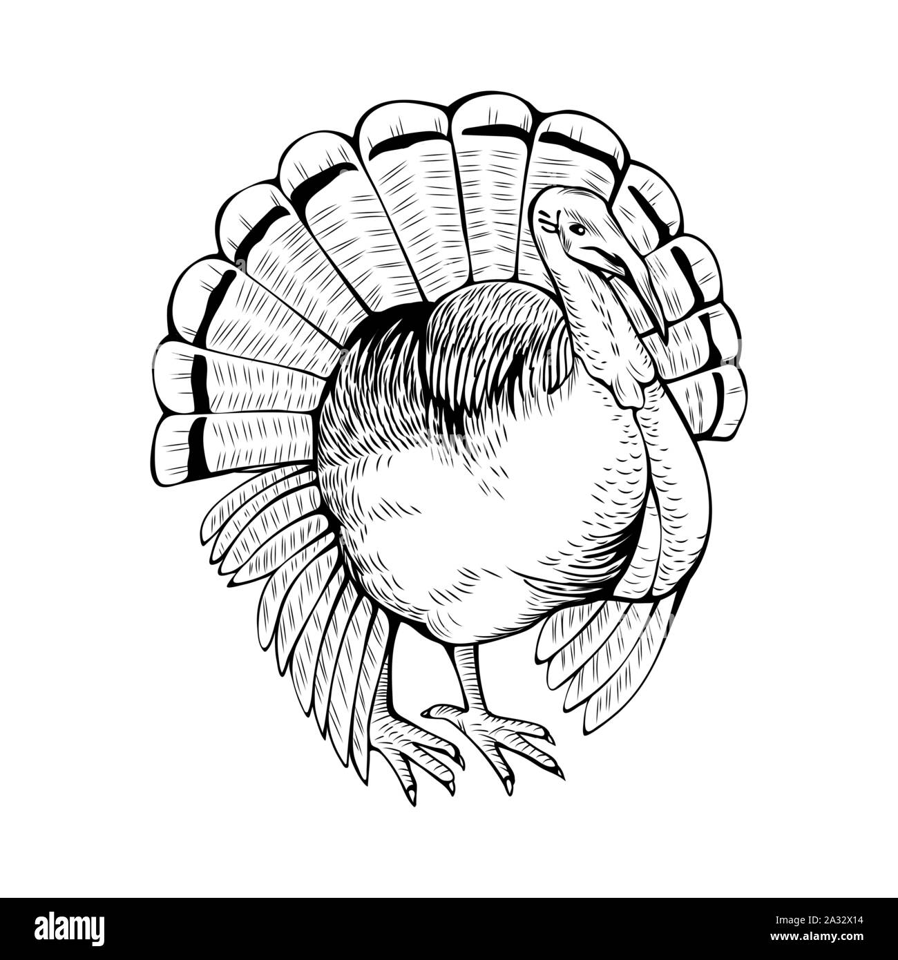 Turkey hand drawn vector illustration. Poultry farm animal. Gobbler, domestic bird, fowl ink pen sketch drawing. Rural wildlife, farming monochrome outline symbol isolated on white background Stock Vector