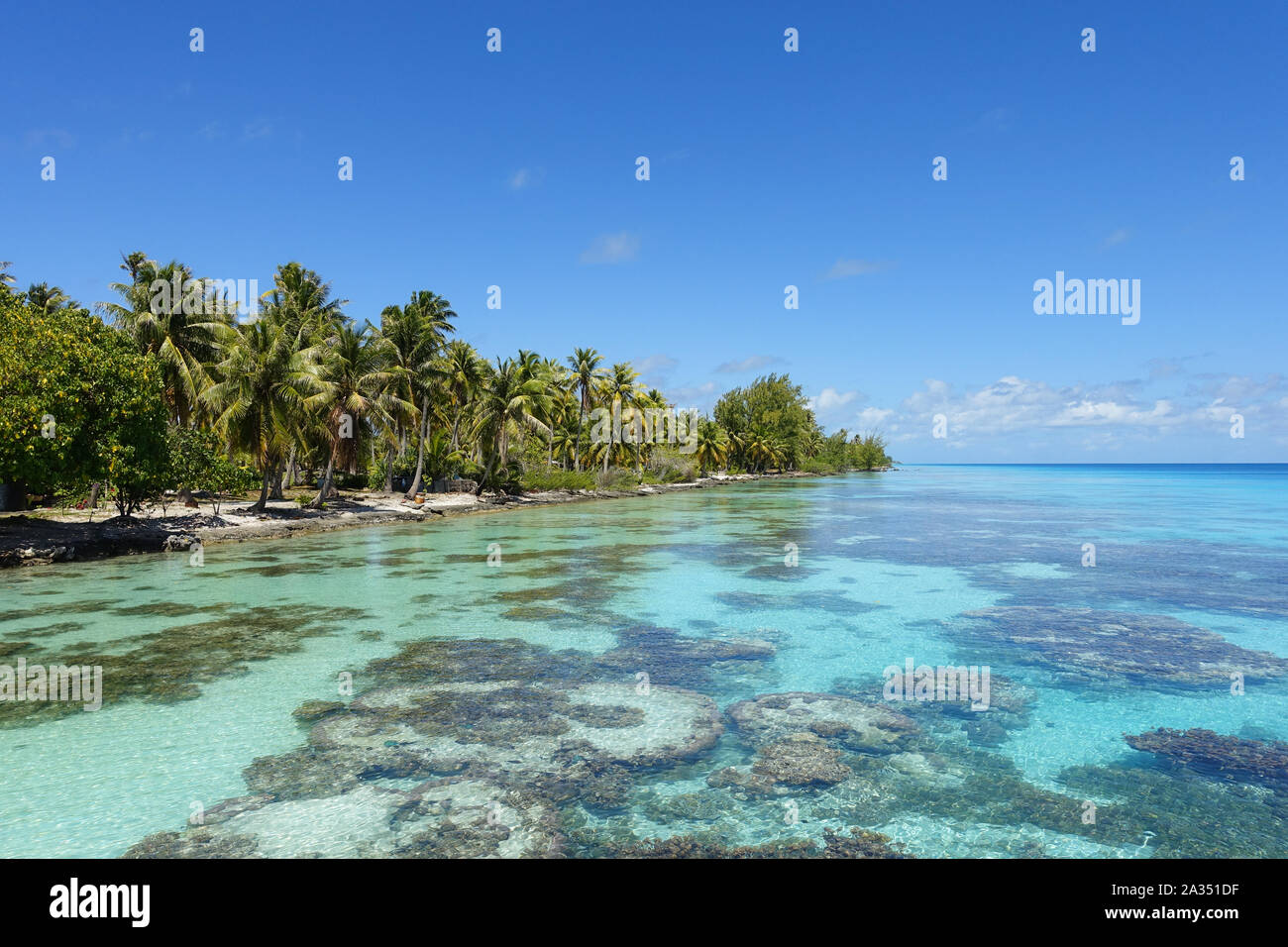 Palm trees line a sandy beach next to a tropical lagoon filled with coral under a bright blue sky Stock Photo