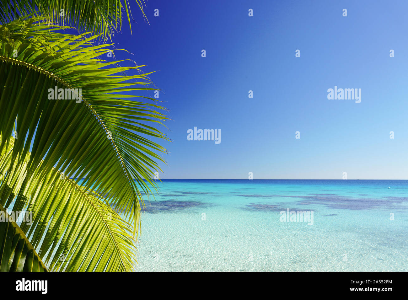 The leaves of a palm tree frame a turquoise lagoon surrounded by a bright clear blue sky with copy space Stock Photo