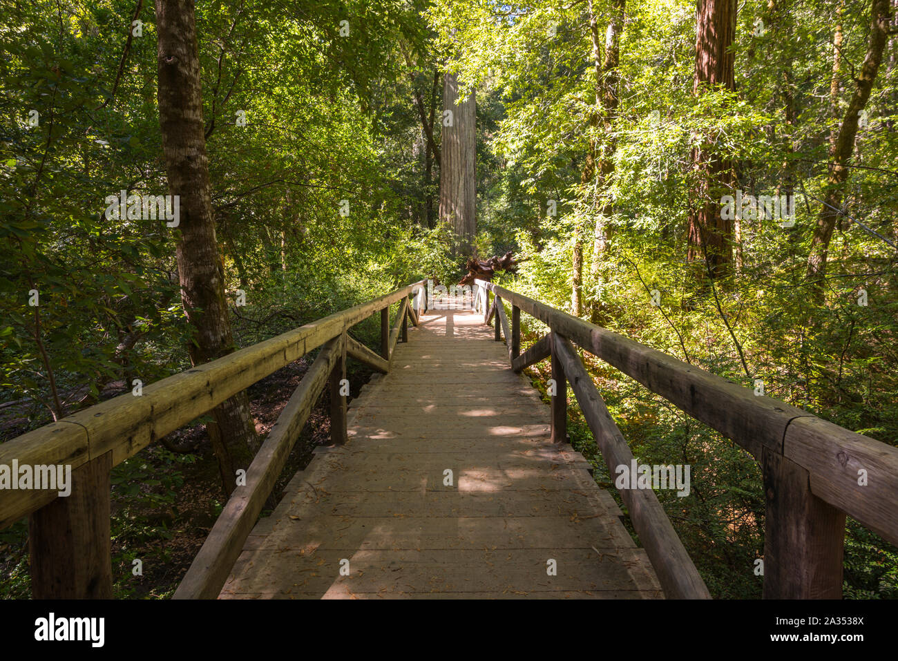 Big Basin Redwoods State Park.  Santa Cruz county, California, USA. Stock Photo