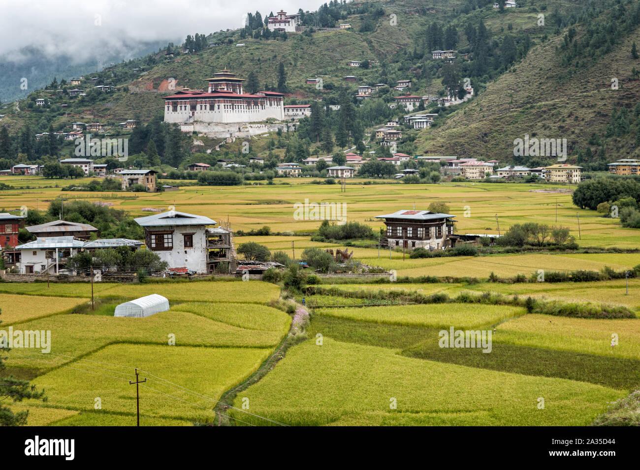 Rice fields and Paro dzong (Rinpung Dzong), Bhutan Stock Photo