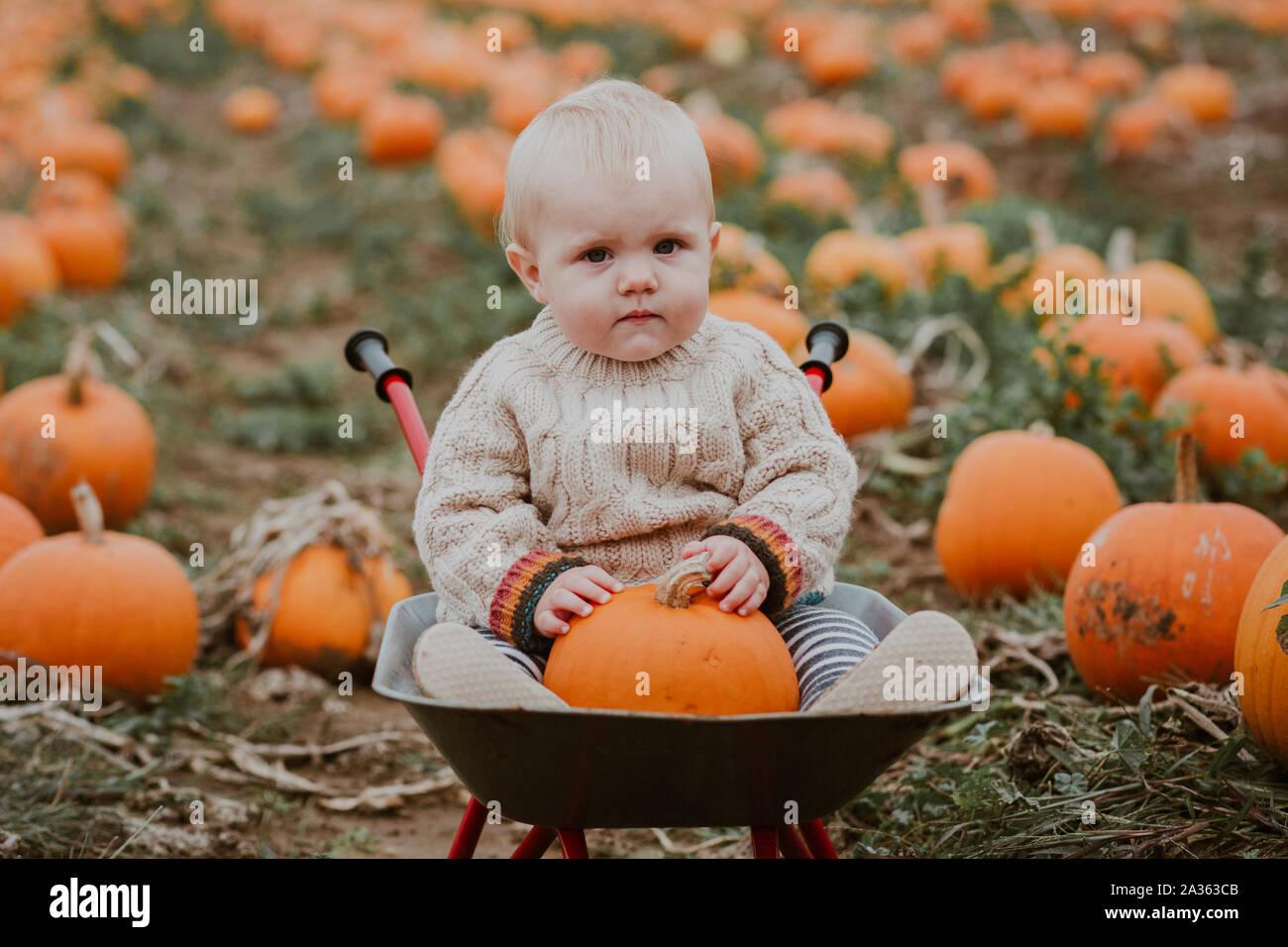9 month old boy pumpkin picking Stock Photo