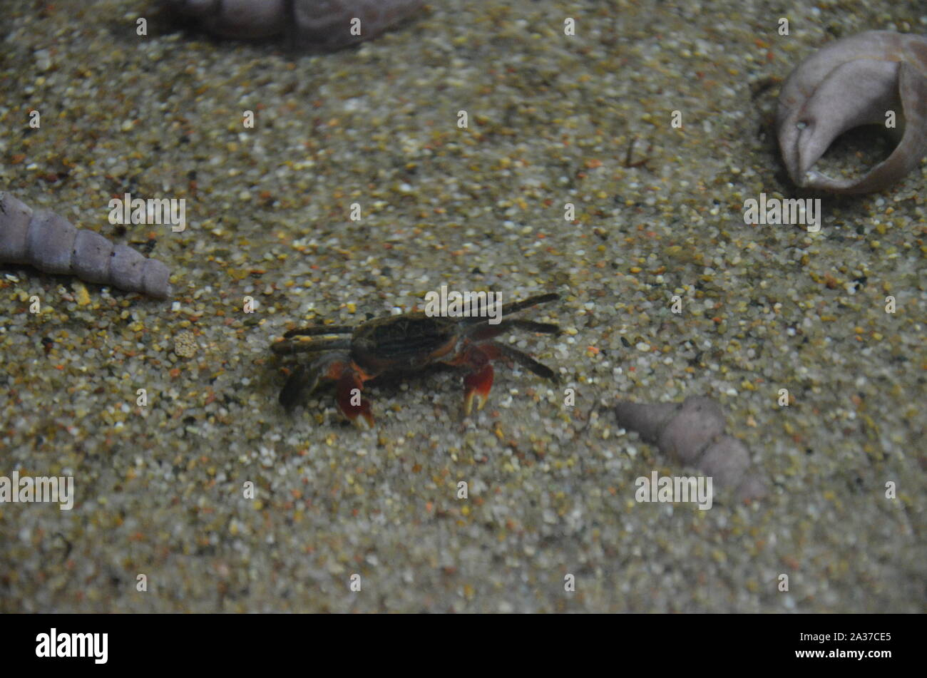 The marine life in aquarium of Berlin (Germany) Stock Photo